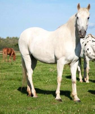 pferd zur verfügung gesucht